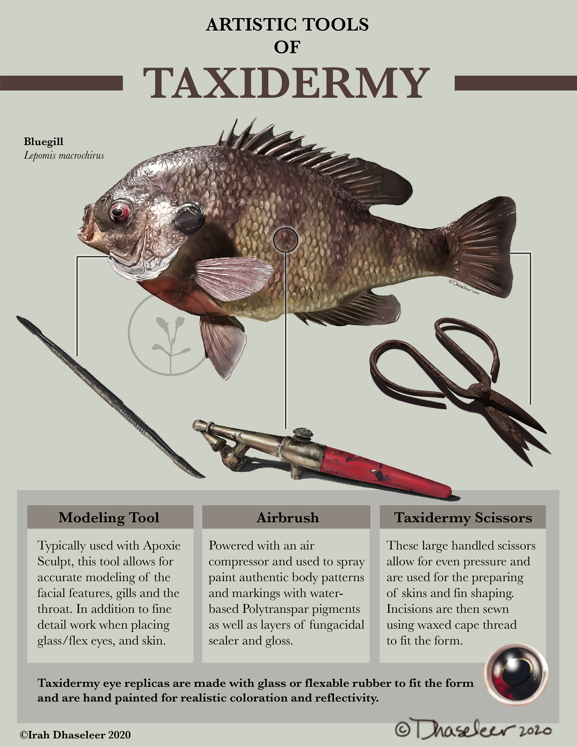 Tools of Taxidermy